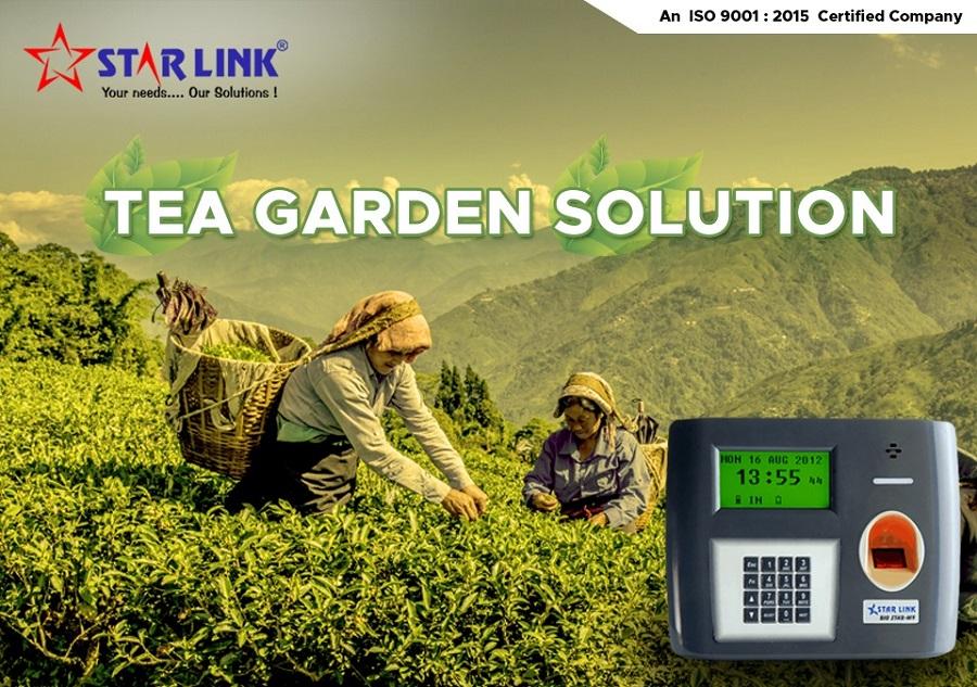 Tea Garden Solution