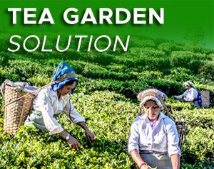tea-garden-solution